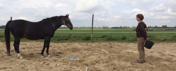 Coach en paard